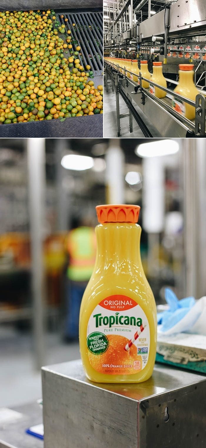 Ever wondered where Tropicana gets its oranges from? Comes along for this tropicana orange groves tour showing you how their 100% pure orange juice is made!