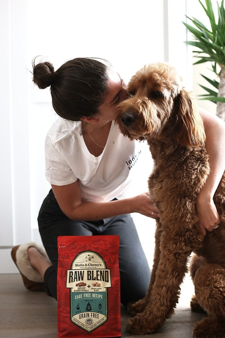 What is an Emotional Support Animal (ESA)? How do you get your dog certification? This post answers both of these questions as well as how to care for your ESA.