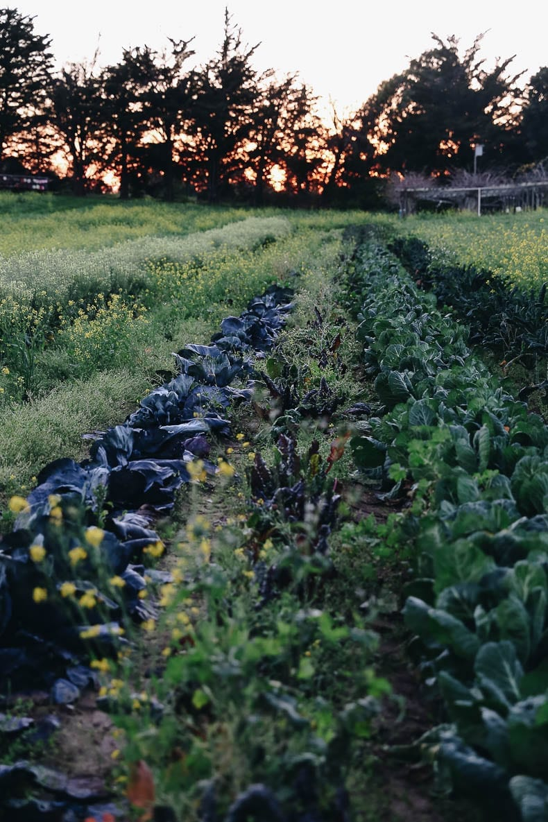 Does organic really matter and how organic vs. conventional farming affects our soil